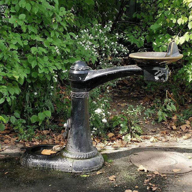 Tankla #pause #water #bird #centralpark #ny